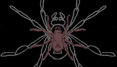 Village Spider
