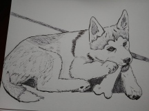 Day 6: Husky Puppy